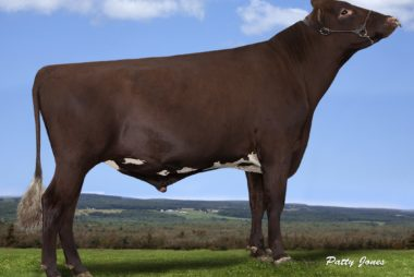 Available Sires / Taureaux Disponible